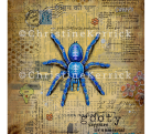 The Gooty Sapphire Ornamental Tarantula